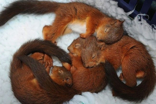 loving-animals-using-each-other-as-pillows-my-heart-has-melted-completely-10