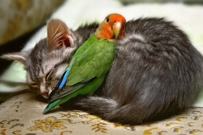 loving-animals-using-each-other-as-pillows-my-heart-has-melted-completely-19