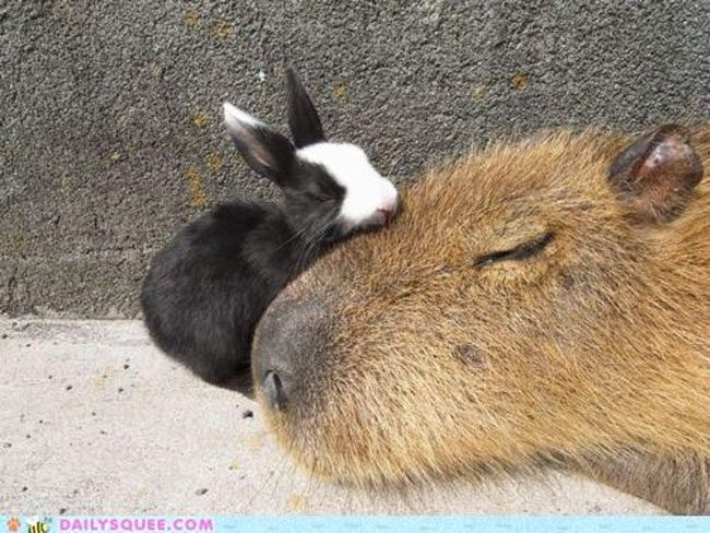 loving-animals-using-each-other-as-pillows-my-heart-has-melted-completely-8