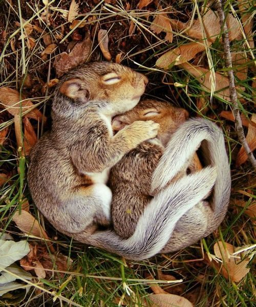 sleeping_baby_squirrels