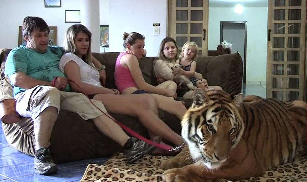 tigree