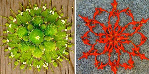danmala-flower-mandala-kathy-klein-33