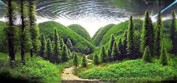 Floresta Subaquatica 1