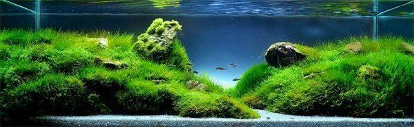 Floresta Subaquatica 10