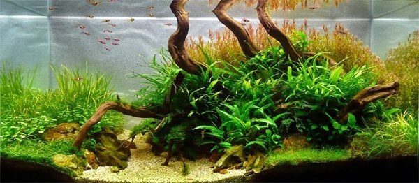 Floresta Subaquatica 11
