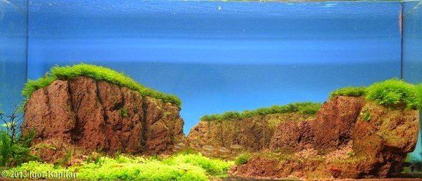 Floresta Subaquatica 12