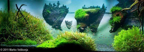 Floresta Subaquatica 13