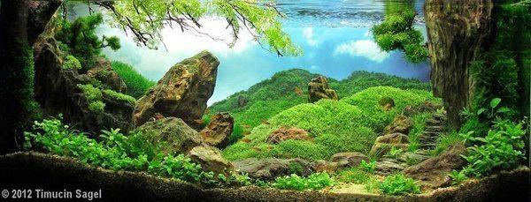 Floresta Subaquatica 14