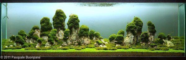 Floresta Subaquatica 15