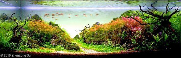 Floresta Subaquatica 16