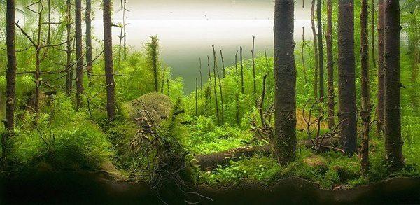 Floresta Subaquatica 2