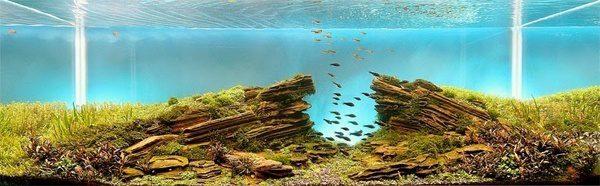 Floresta Subaquatica 3