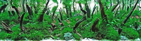 Floresta Subaquatica 4