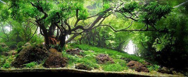 Floresta Subaquatica 5