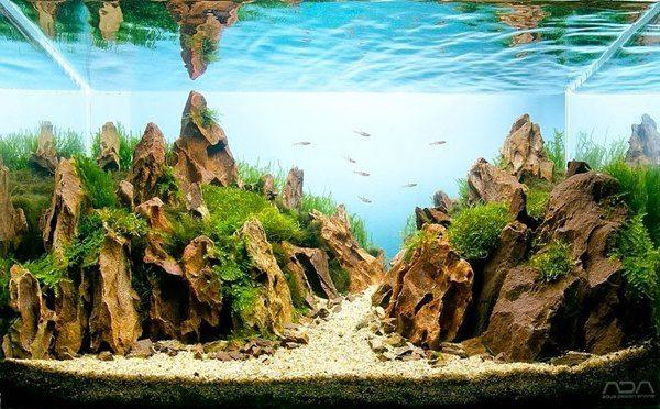 Floresta Subaquatica 6