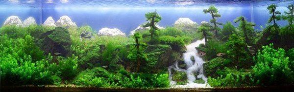 Floresta Subaquatica 7