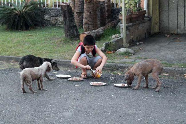 Abrigo de animais (1)