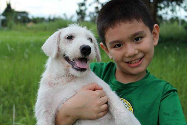 Abrigo de animais (11)
