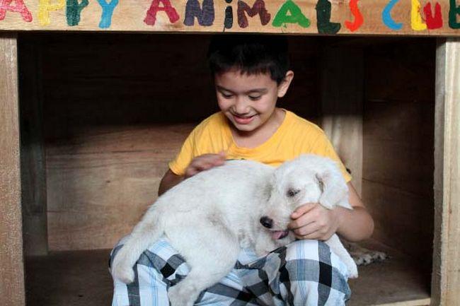 Abrigo de animais (13)