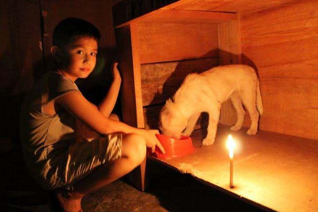abrigo animais 15