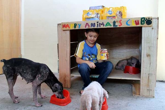 Abrigo de animais (5)