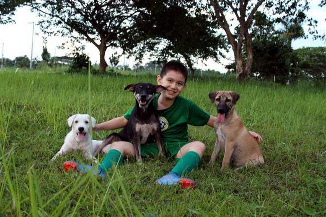 Abrigo de animais (6)
