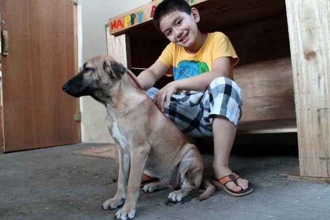 Abrigo de animais (9)
