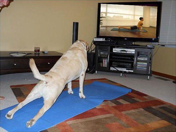 animais-yoga-14