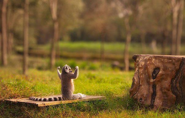 animais-yoga-21