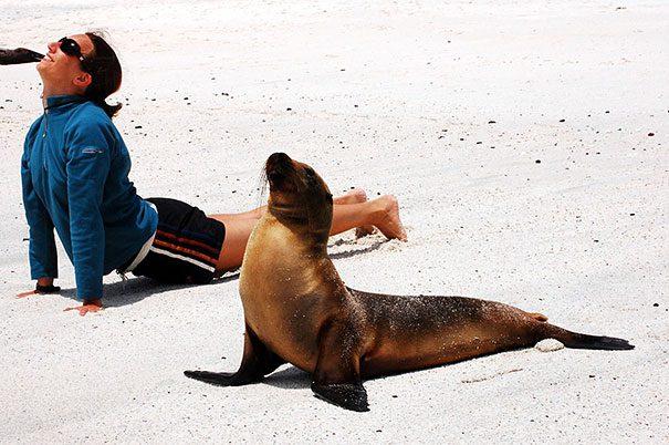 animais-yoga-5