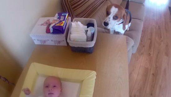 cachorro troca fralda