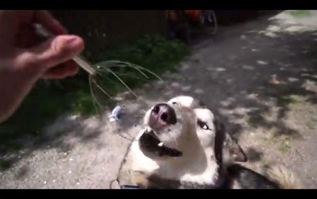cachorrofeliz