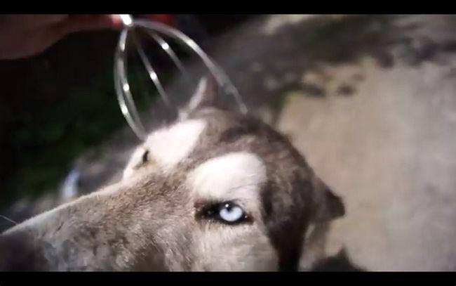cachorrofeliz1