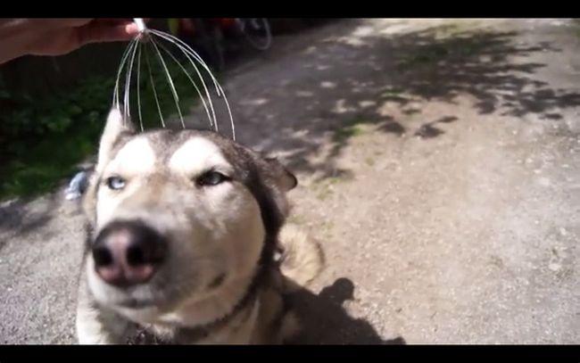 cachorrofeliz2