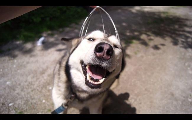 cachorrofeliz4