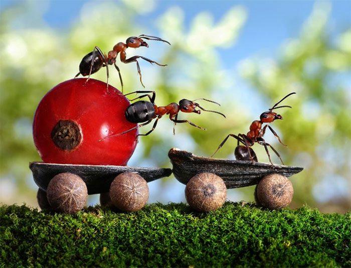 formigas-pavlov-10