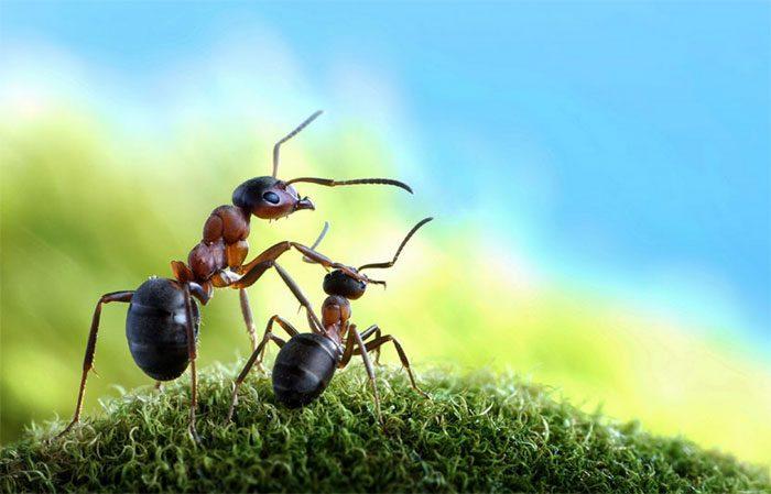 formigas-pavlov-11