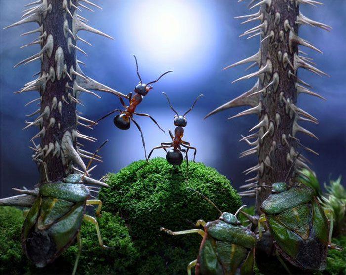 formigas-pavlov-12