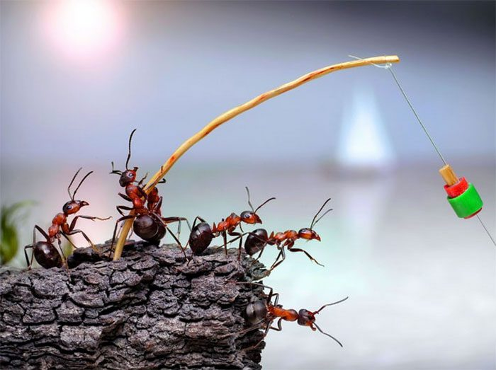 formigas-pavlov-13