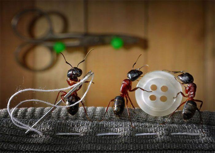 formigas-pavlov-18