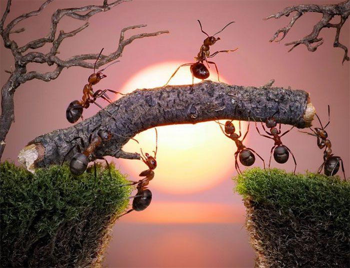 formigas-pavlov-2