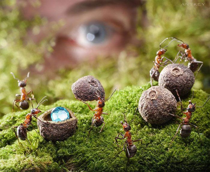 formigas-pavlov-3