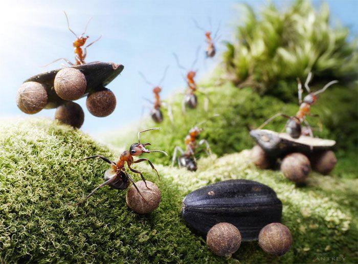 formigas-pavlov-5