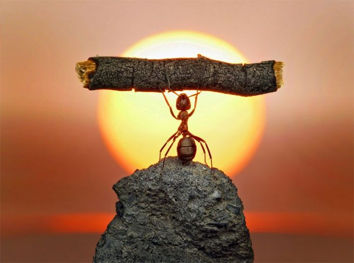 formigas-pavlov-7