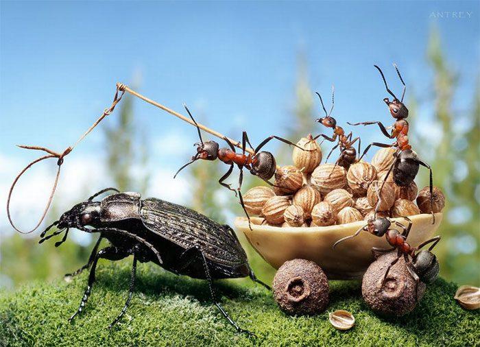 formigas-pavlov-9