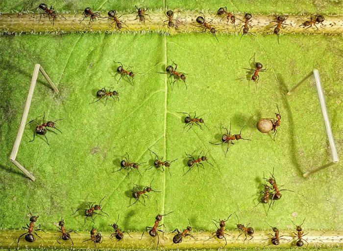 formigasantes