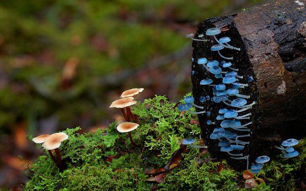 fungi05