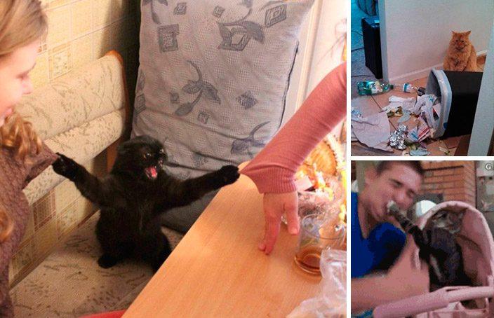 humanos não são bons gatos
