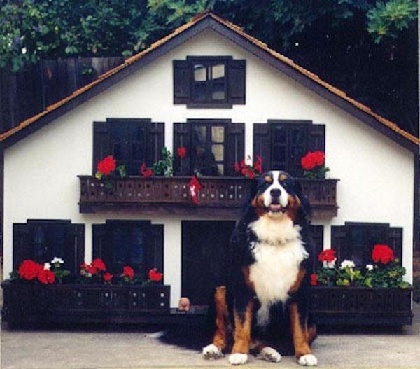 mansao-cachorro-5