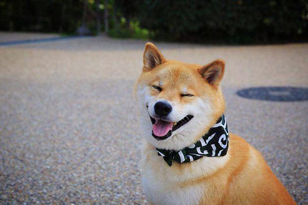 HappyMaru3